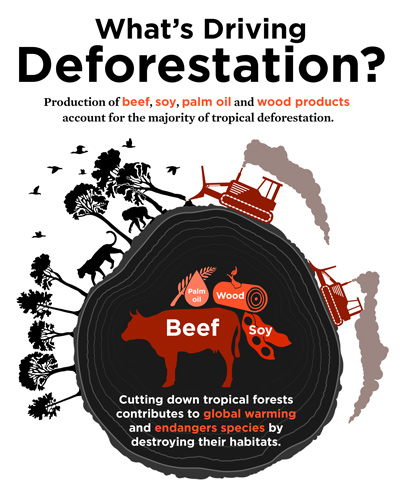 deforestation for paper facts The permanent chopping, clearing and subtraction of trees intentionally is called deforestation more about facts, causes and effects of deforestation what can we do to stop deforestation reduce paper use educate ourselves and others on importance of forests.