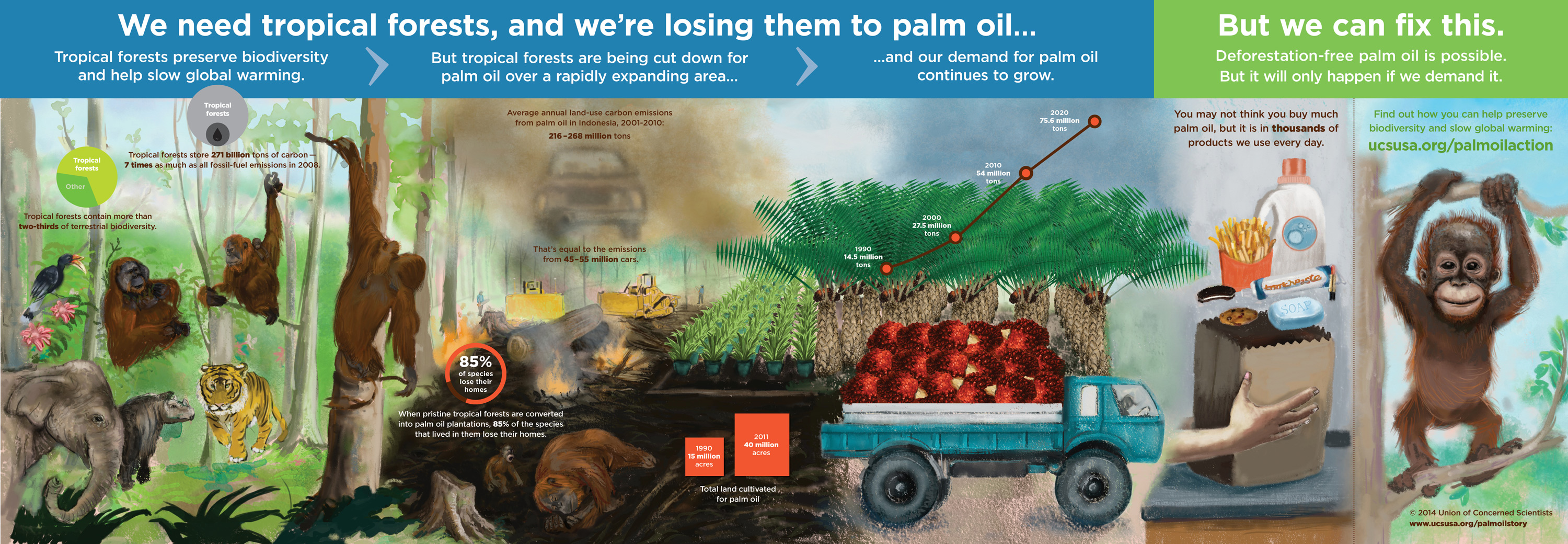 http://www.ucsusa.org/sites/default/files/legacy/assets/images/gw/Palm-Oil-2-6-14-2216px-1.jpg