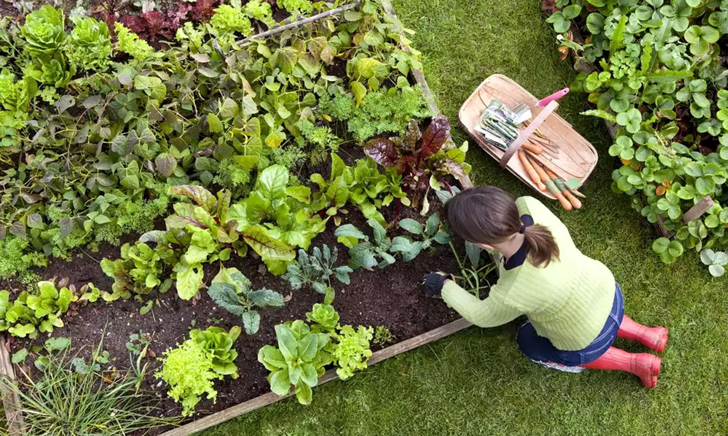 The Climate-Friendly Gardener | Union of Concerned Scientists