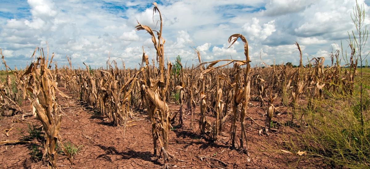 Drought and Climate Change | Union of Concerned Scientists