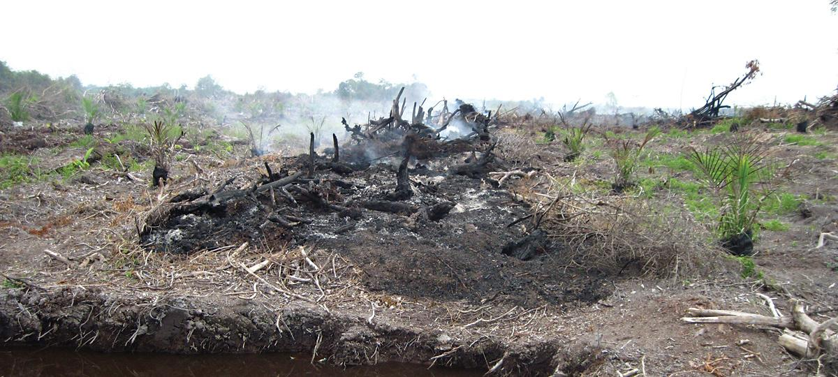 Peatland being burned to make way for palm oil in Malaysia
