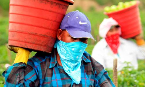 Farmworkers carrying baskets with bandanas over their faces